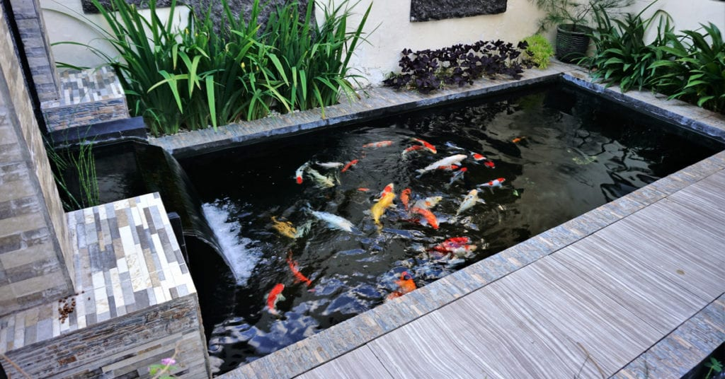 Refreshing Water Feature Accents, Koi Pond