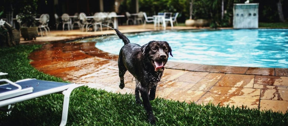Even if Fido can swim, follow these 10 pool safety tips for pets