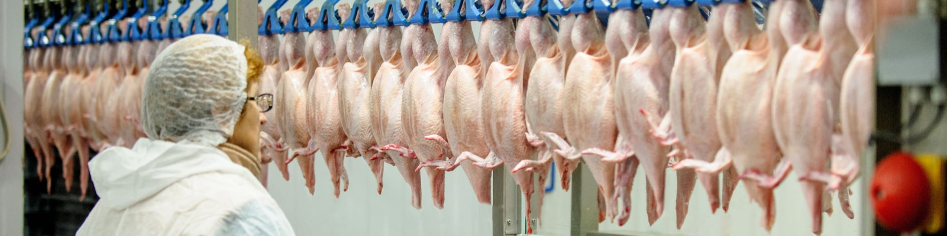 Worker Safety and Health: OSHA Targets Poultry Processing Due To High Injury and Illness Rates