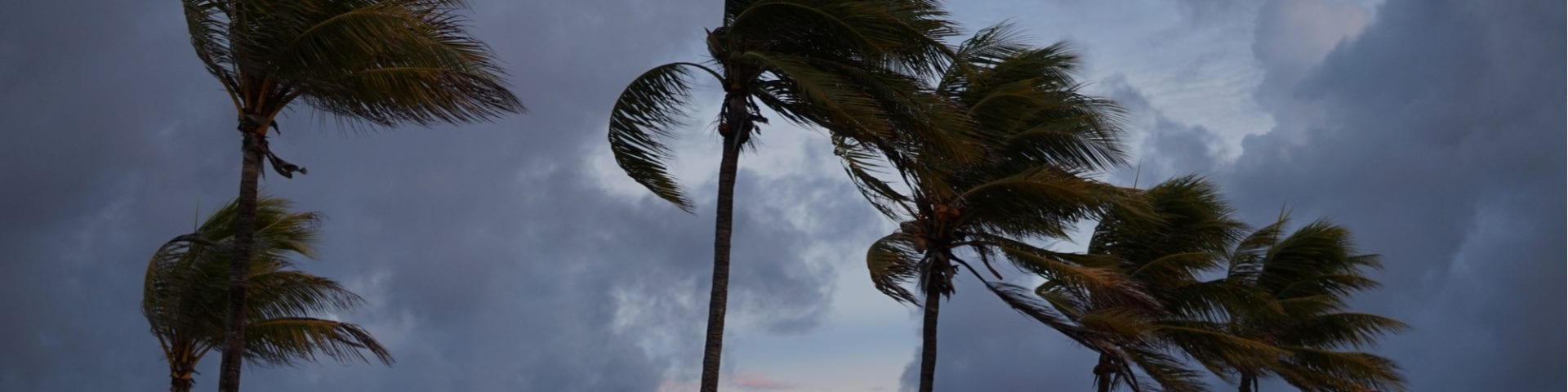 A Moldy Summer and the Three H's: Hot, Humid and Hurricanes