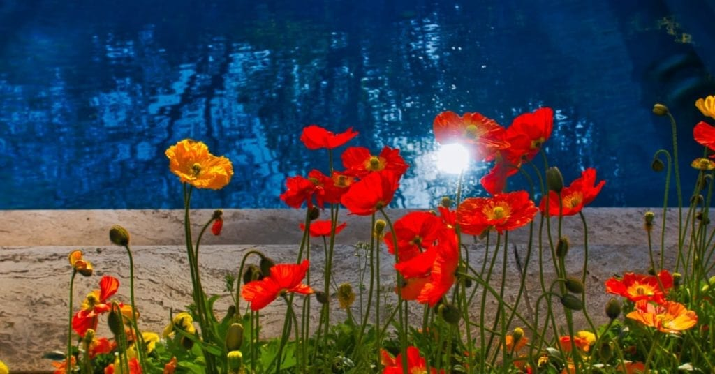 Get a Custom Swimming Pool With the Red Poppy Charm of Georgetown TX