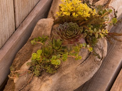 shutterstock 596879777 Driftwood Landscaping Ideas and Garden Accents IES Pools