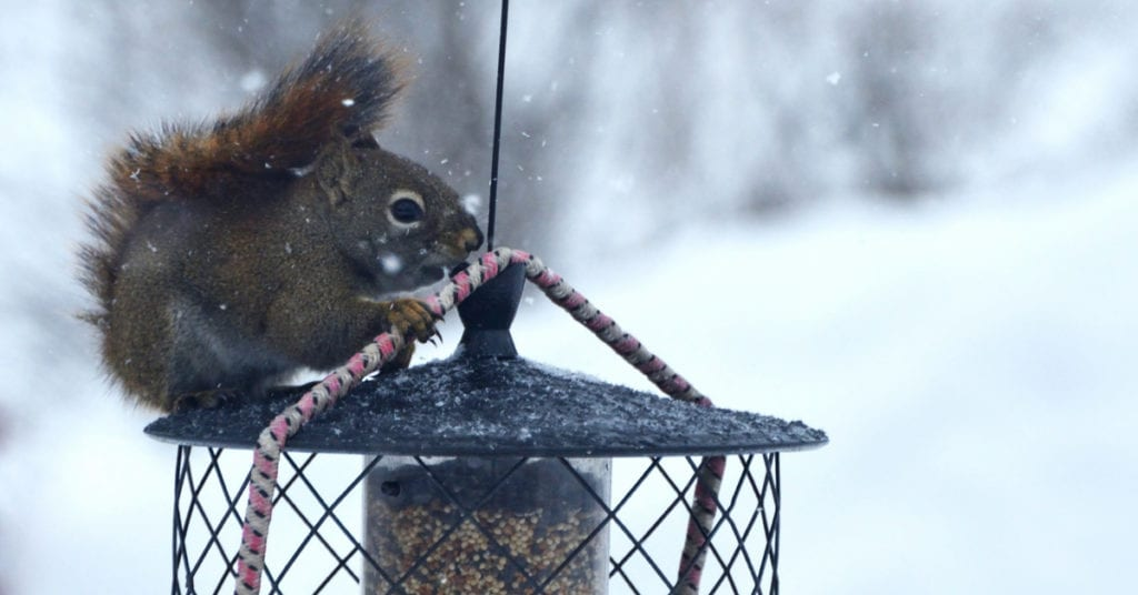 Can Squirrels Damage Your Home?