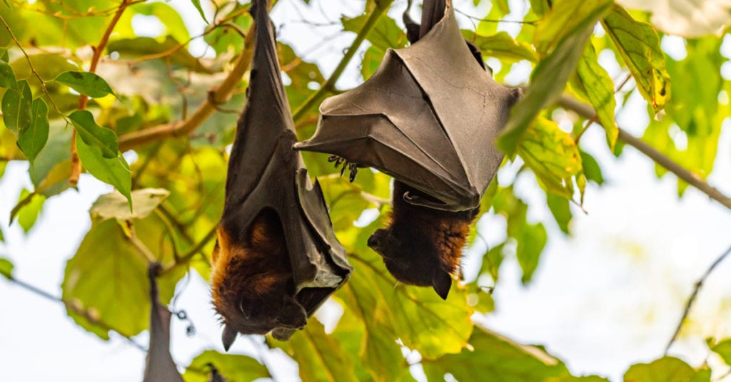 What to Do If a Bat Touches You?