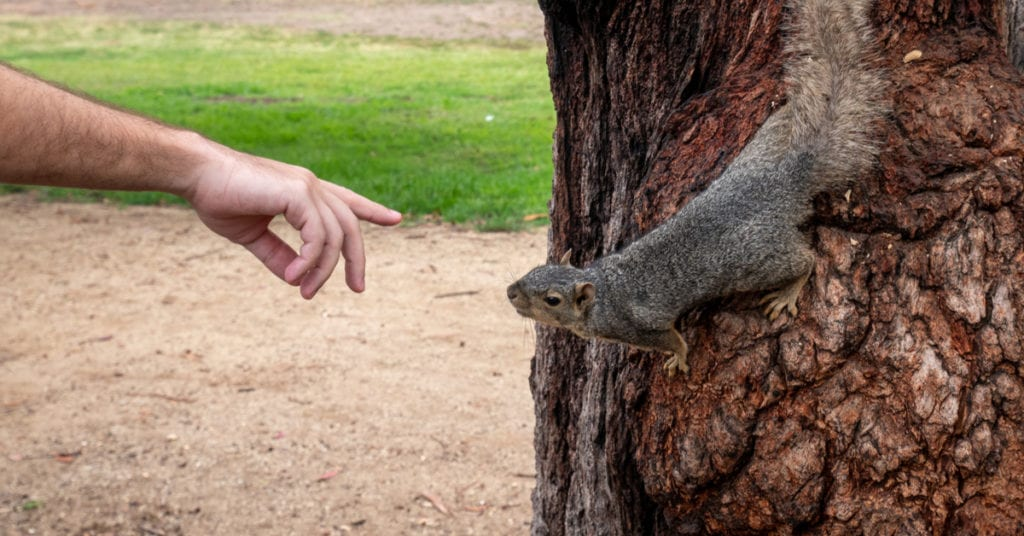 Is It Okay To Touch A Squirrel