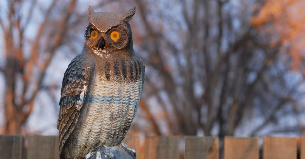 Do Fake Owls Scare Squirrels?