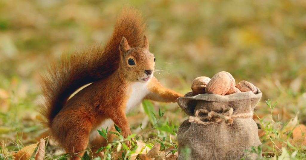How Do You Scare Away Squirrels?