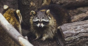 Warren County Ohio Wildlife Animal Removal and Control Services
