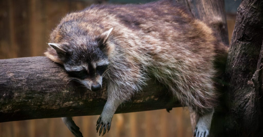 Clermont County OH Wildlife Animal Removal, Control