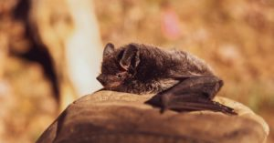 How To Get Rid of Bats In Attic