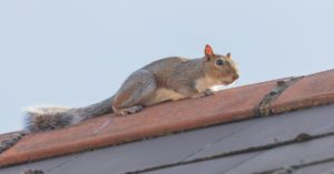 3 Tips: How To Solve Squirrel Problems