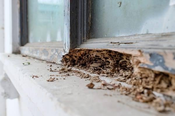 termites, removal and control