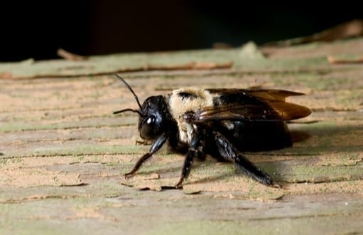 bees: bee removal and control