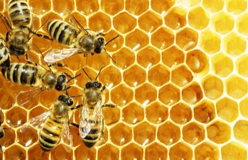 honey bees; bee removal and control
