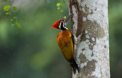 birds: bird removal and control, woodpeckers