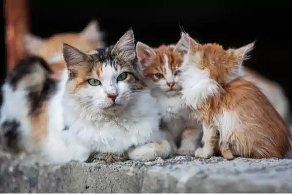 Feral Cat Removal