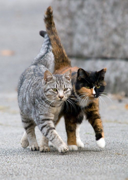 Feral Cats, Feral Cat And Stray Cat Removal