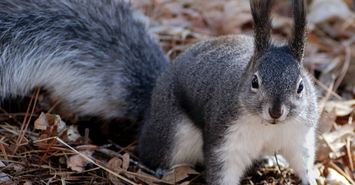 How To Get Rid of Squirrels in Attic or on Roof SC