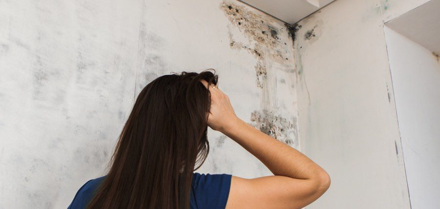 How to remove mold from my house