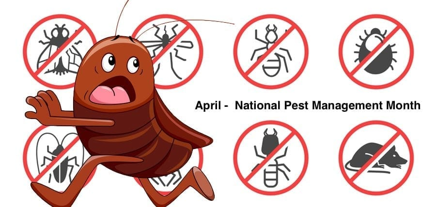 Prevent Pest Infestations, April National Pest Management Month