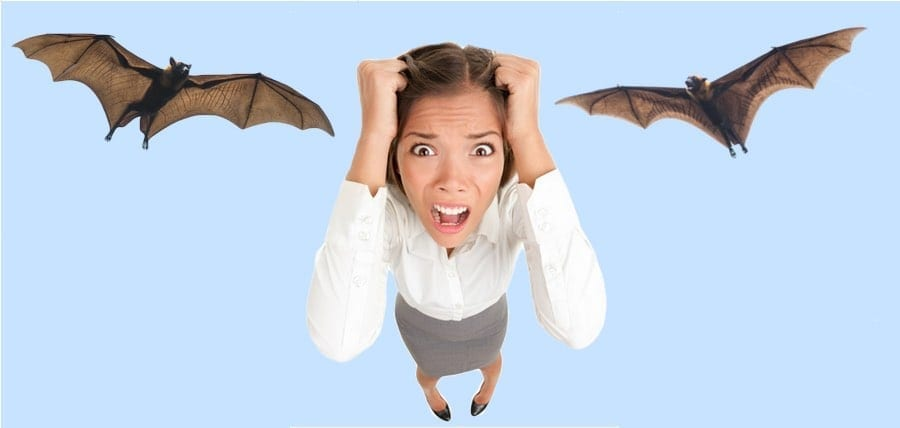 Bats In My Home! What Do I Do?