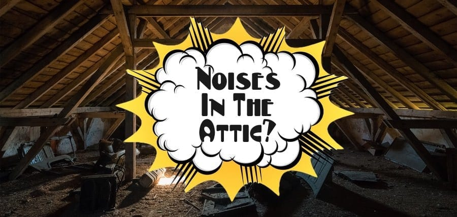 Noises In Attic What To Do Pest Removal Nj Pest Control