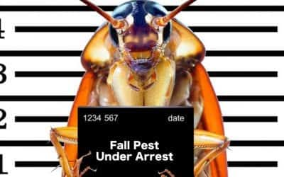 Why Fall Pest Control Is Important