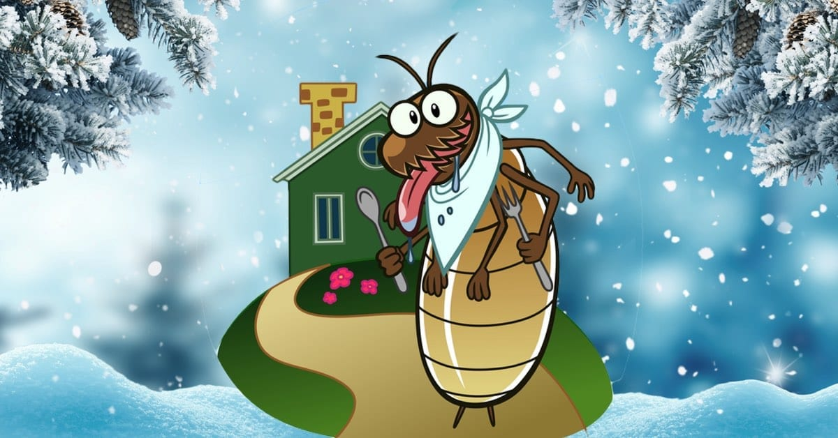 Winter Bugs That May Be Entering Your Home