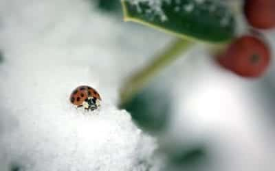 Insect Infestation and Why You Need Pest Control in the Winter