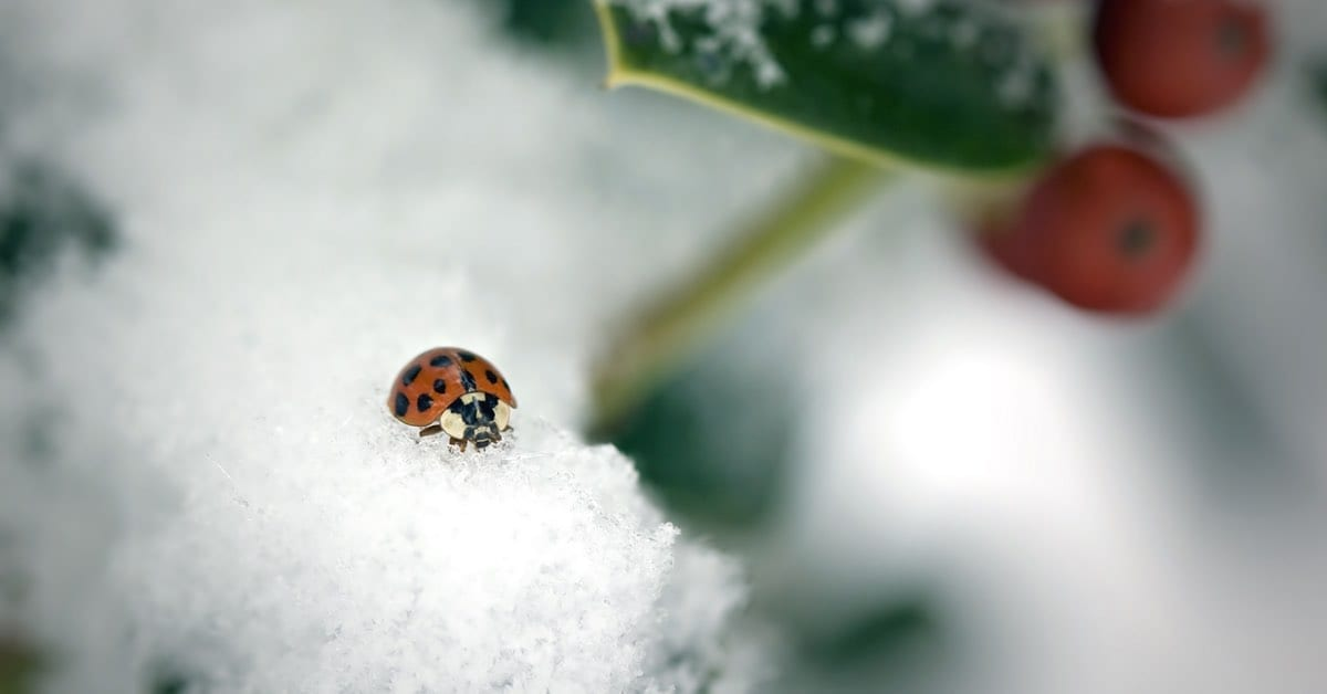 Winter Insect Infestation & Pest Control