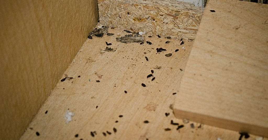 7 Signs of a Mouse Infestation