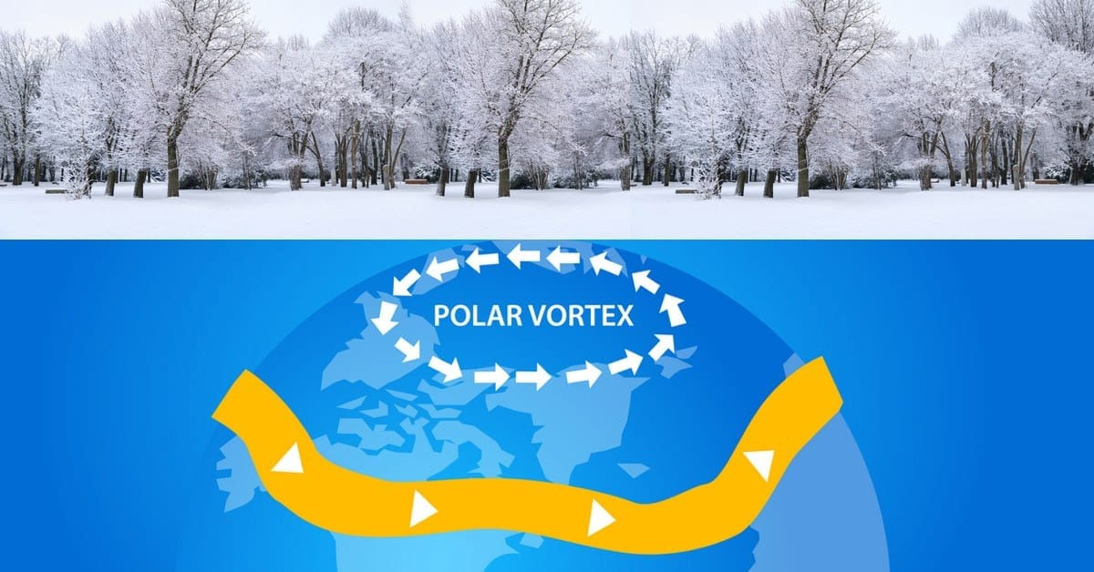 Good News! Polar Vortex May Have Killed Off Many NJ Pests