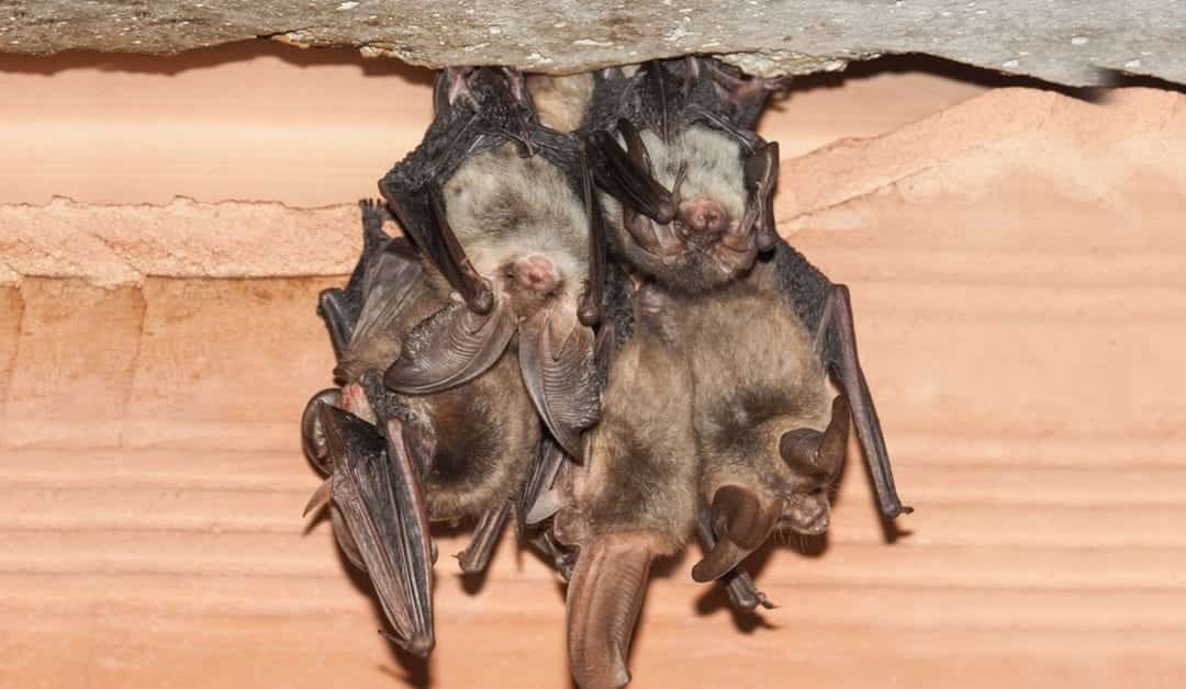 Professional & Affordable Bat Removal, Morris County, NJ