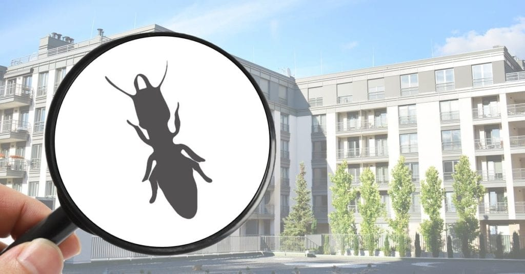 Pest Control And Pest Management For Property Managers