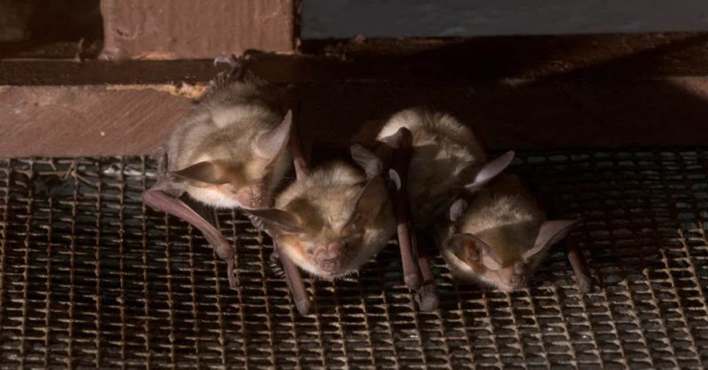 How To Get Rid Of A Bat In The House?