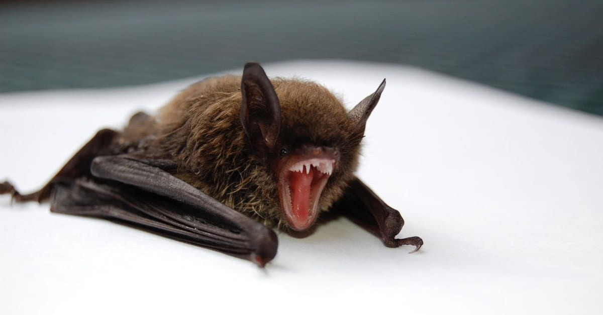 coronavirus outbreak linked to bats