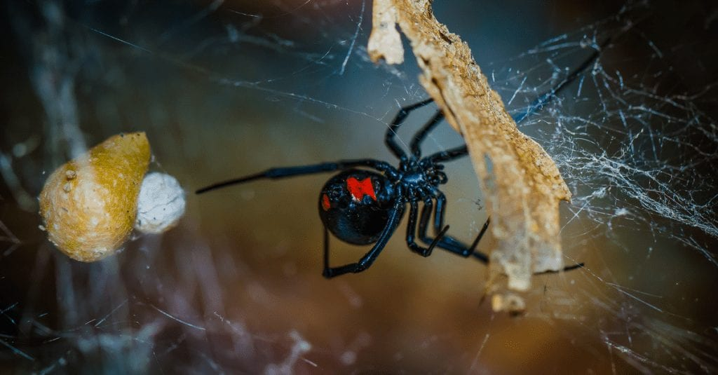 5 Ways To Keep Spiders Out Of Your Home