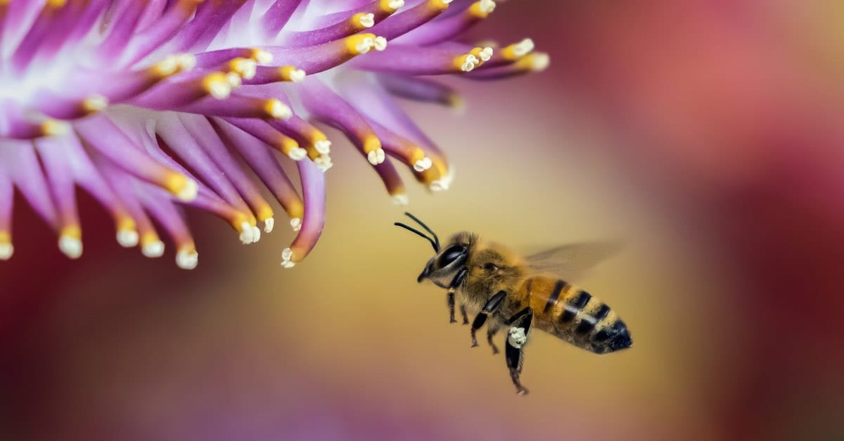Better Beelive It! 4 Facts about the honeybee, the official State Bug of New Jersey