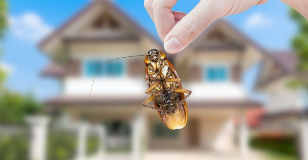 7 SPRING PEST PREVENTION TIPS