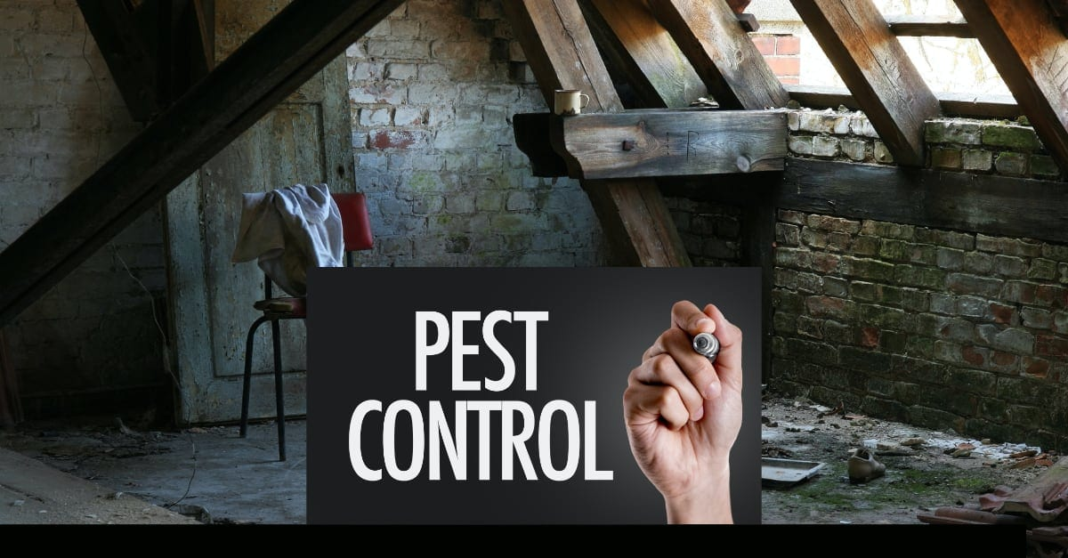 Beware! Attic restoration does not solve pest control problems