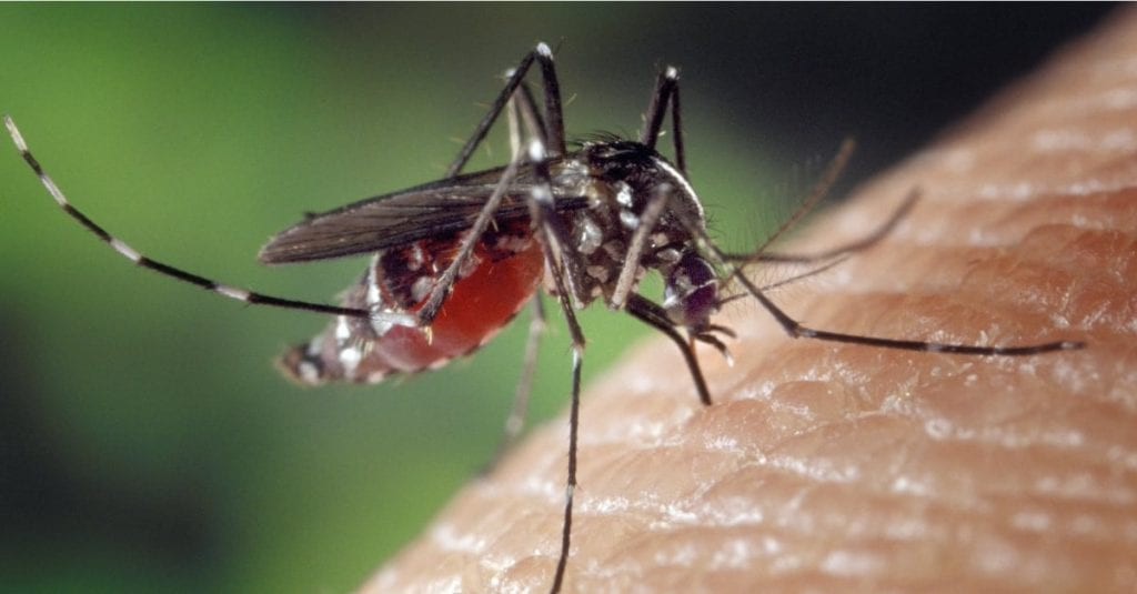 HOW TO CONTROL THE FEMALE BLOODSUCKING MOSQUITO THIS SPRING AND SUMMER