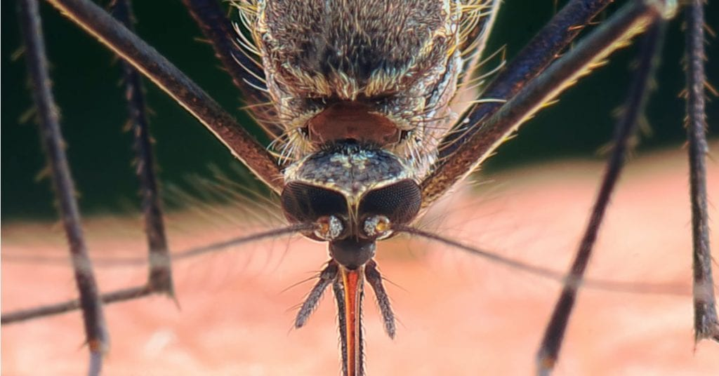 A DANGEROUS PEST: WHY YOU DON'T WANT TO BE A MOSQUITO MAGNET