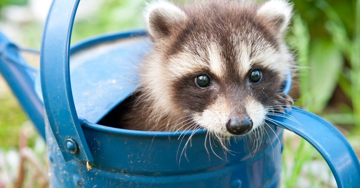The Benefits of Hiring a Professional Wildlife Control and Removal Company in Morris County NJ