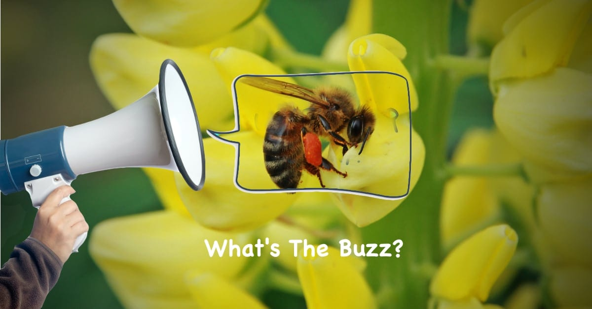 What's The Buzz? Parsippany Pest Control Provides Peace of Mind | NJ Pest