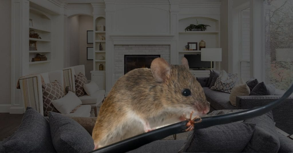 Pest Control Passaic County Nj, Get Rid Of Bugs For Good!