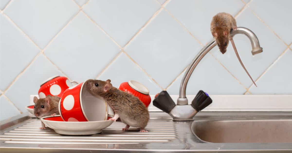 Bergen County NJ Pest Control and Wildlife Removal