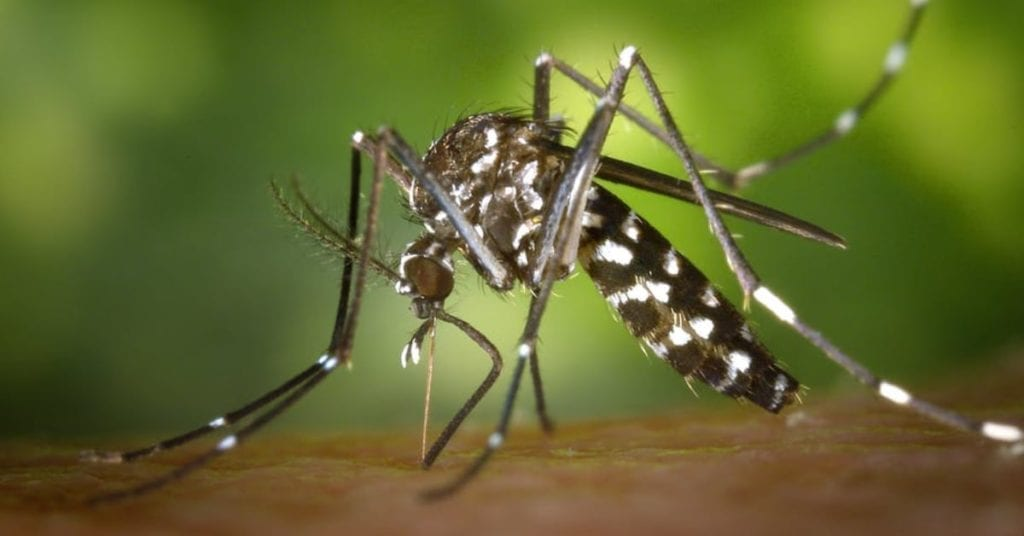 Types Of Mosquitoes In New Jersey