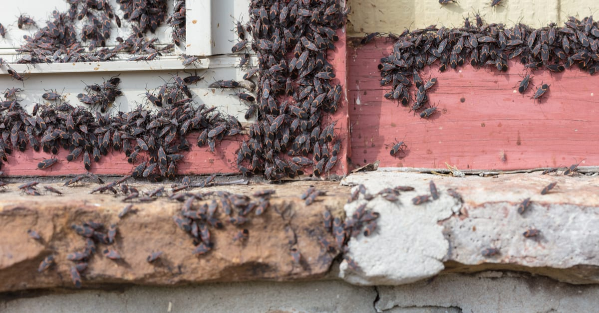 Complete List of Hibernating Insects