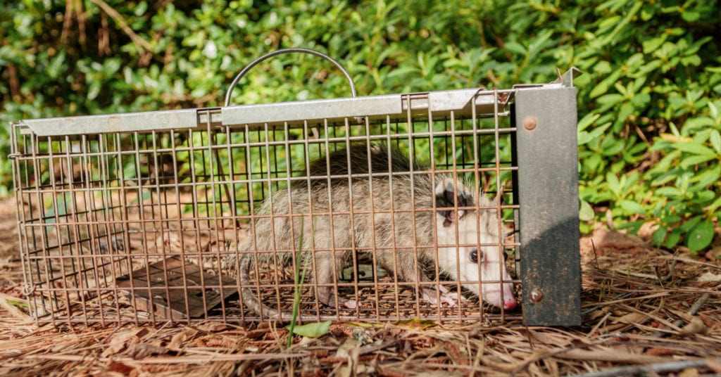 Wildlife Animal Trapping Services