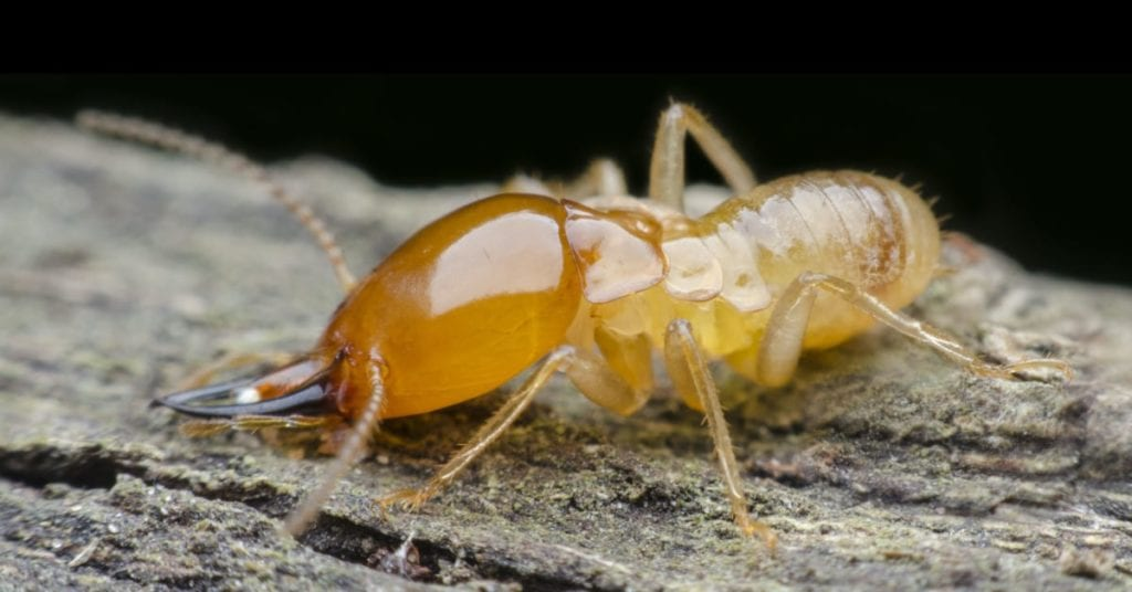 Termites? 7 Early Warning Signs To Be Aware Of